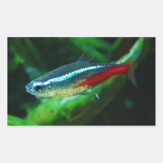 Tetra Paracheirodon de neón Innesi de los pescados Pegatina Rectangular