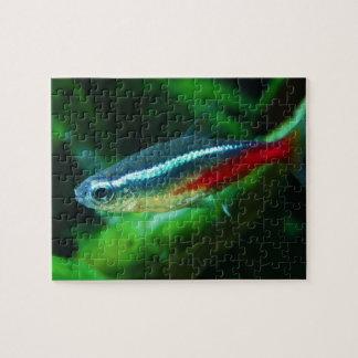 Tetra Paracheirodon de neón Innesi de los pescados Puzzle