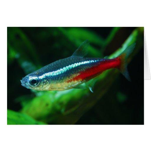 Tetra Paracheirodon de neón Innesi de los pescados Tarjetas