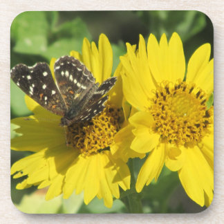 Texan Crescent Butterfly Coasters
