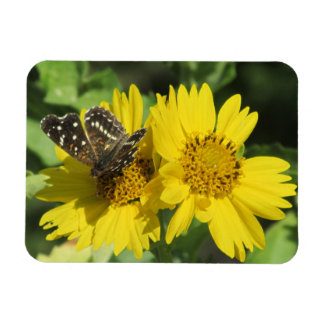Texan Crescent Butterfly Magnet