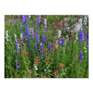 Texas Blue Bonnets Poster