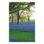 Texas Blue Bonnets Stationery