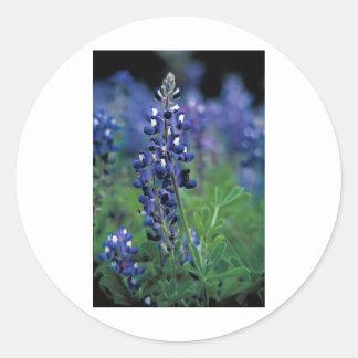 Texas Bluebonnet-2-Best Classic Round Sticker