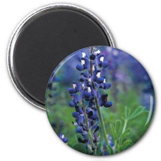 Texas Bluebonnet-2-Best Magnet