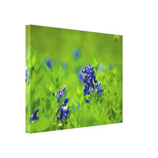 Texas Bluebonnet Canvas Canvas Prints