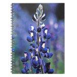 Texas Bluebonnet Notebook