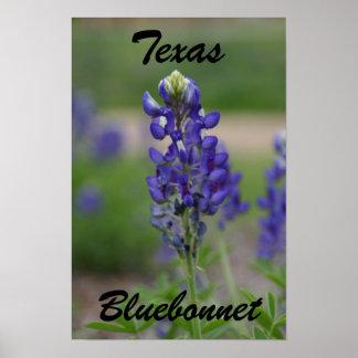 Texas, Bluebonnet Poster