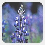 Texas Bluebonnet Square Sticker