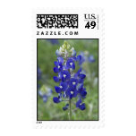 Texas Bluebonnet Wild Flower Postage
