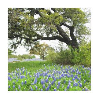 Texas Bluebonnets 16 x 16 Wrapped Canvas