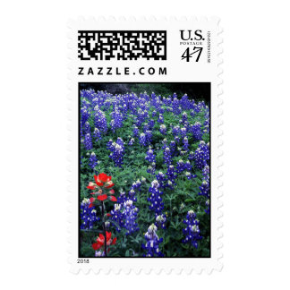 Texas Bluebonnets and Indian Paintbrush Postage