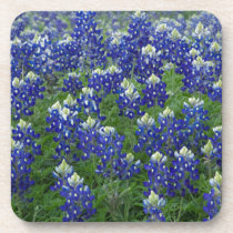 Texas Bluebonnets Field Photo Coaster