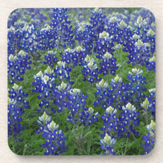 Texas Bluebonnets Field Photo Coaster