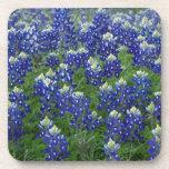 Texas Bluebonnets Field Photo Drink Coasters