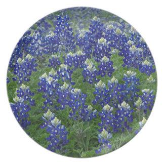 Texas Bluebonnets Field Photo Plate