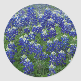 Texas Bluebonnets Field Photo Stickers