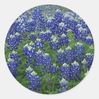 Texas Bluebonnets Field Photo Stickers