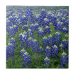 "Texas Bluebonnets Field Photo Tile<br><div class=""desc"">A photo of a field of blooming Texas Bluebonnets.</div>"