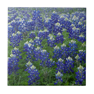 Texas Bluebonnets Field Photo Tile