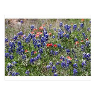 Texas Bluebonnets & Indian Paintbrush Wildflowers Postcard