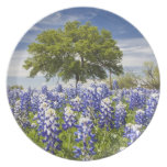 Texas bluebonnets(lupinus texensis) and oak dinner plate