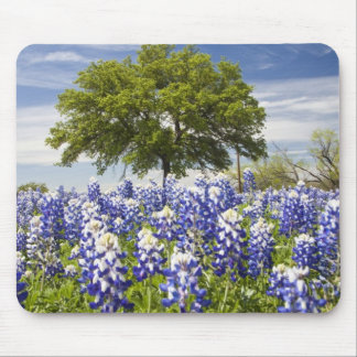 Texas bluebonnets(lupinus texensis) and oak mouse pad
