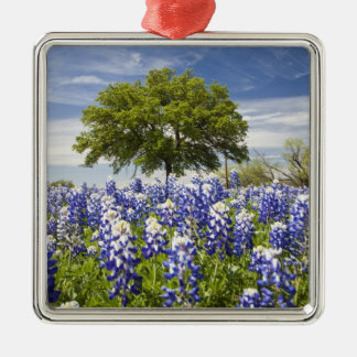 Texas bluebonnets(lupinus texensis) and oak christmas tree ornament