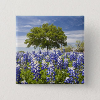 Texas bluebonnets(lupinus texensis) and oak pinback button