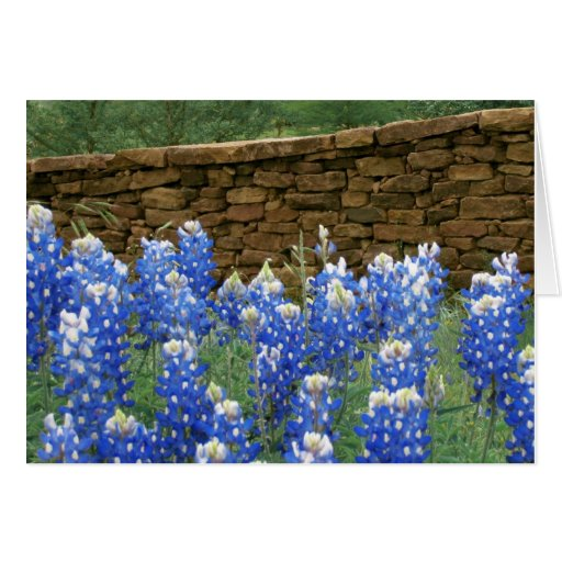 Texas Bluebonnets near old stone fence Greeting Card