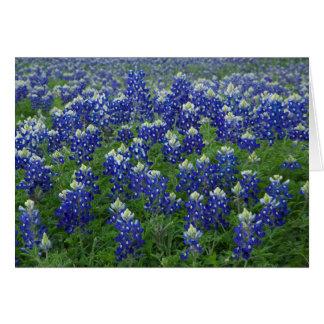 Texas Bluebonnets Photo Blank Card