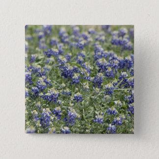 Texas Bluebonnets Photograph Series #11 Button