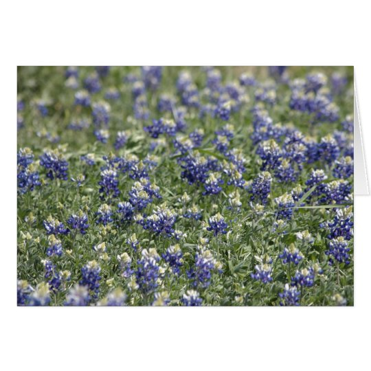 Texas Bluebonnets Photograph Series #11 Card