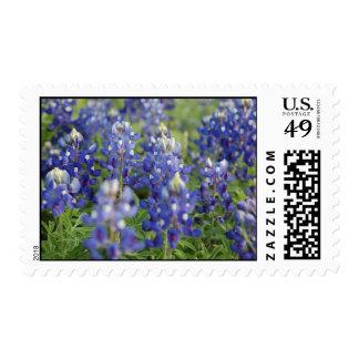Texas Bluebonnets Postage