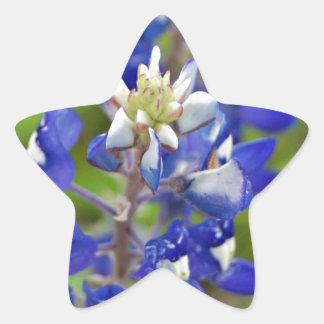 Texas Bluebonnets Star Sticker