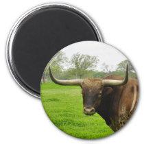 Texas Burnt Orange Longhorn Steer Magnet