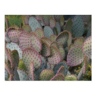 Texas Cacti Postcard