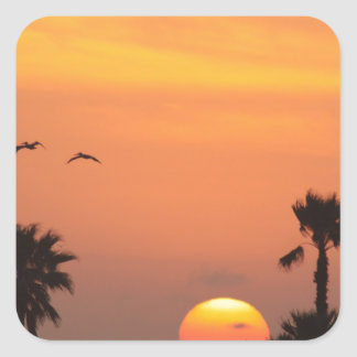 Texas Coastal Sunset :: Pelicans and Palm Trees Square Sticker