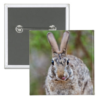 Texas cottontail rabbit 2 inch square button