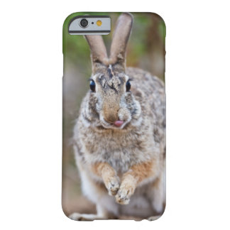 Texas cottontail rabbit barely there iPhone 6 case