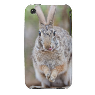Texas cottontail rabbit iPhone 3 Case-Mate cases
