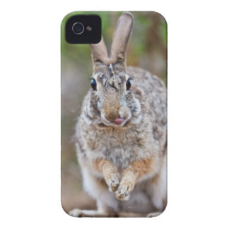 Texas cottontail rabbit iPhone 4 case
