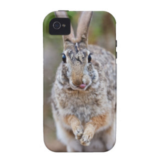 Texas cottontail rabbit iPhone 4 cases