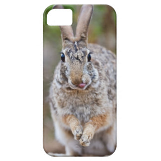 Texas cottontail rabbit iPhone 5 cases
