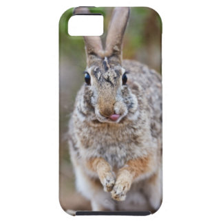 Texas cottontail rabbit iPhone 5 covers
