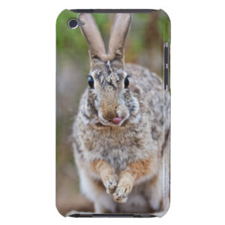 Texas cottontail rabbit iPod touch Case-Mate case