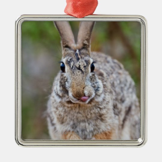 Texas cottontail rabbit metal ornament