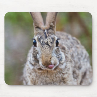 Texas cottontail rabbit mouse pad