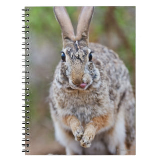 Texas cottontail rabbit notebooks