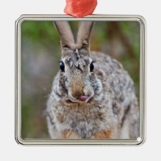 Texas cottontail rabbit square metal christmas ornament